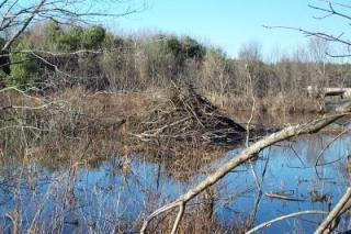 Photo of stream with leafless trees on far shore and leafless fallen branch in foreground